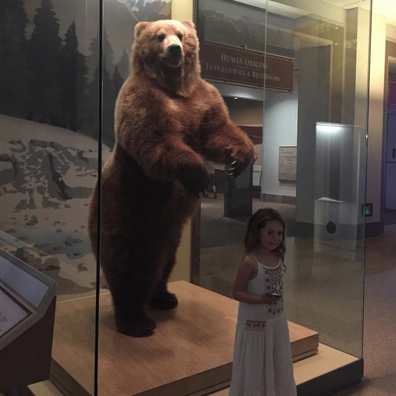 SMNH_bear