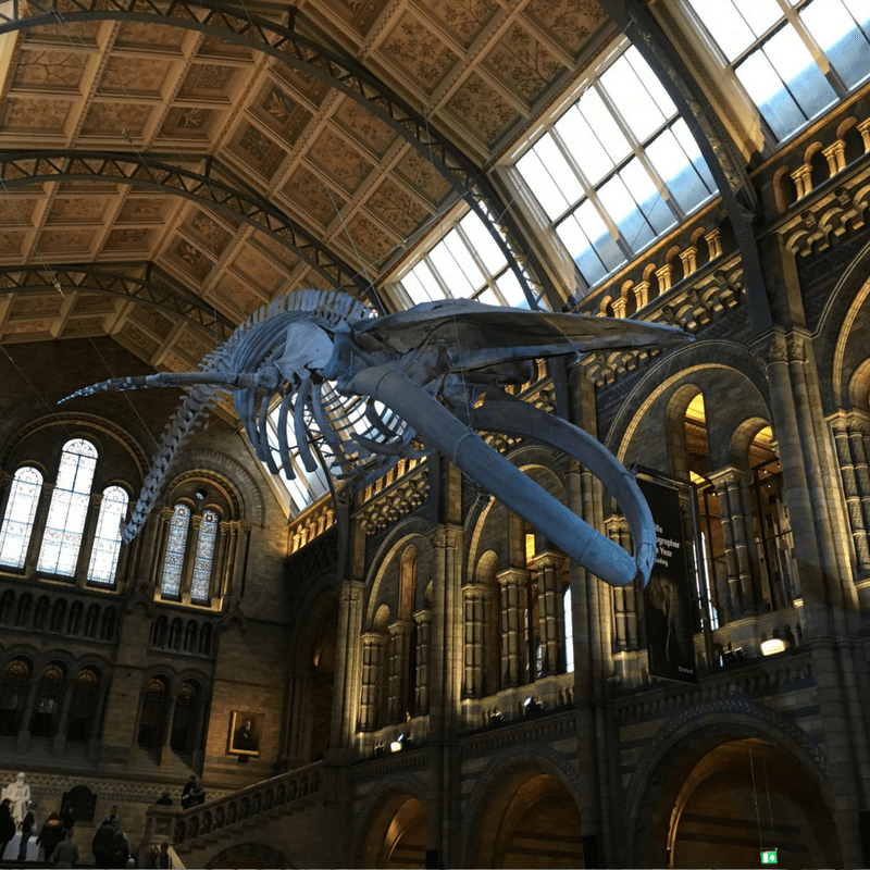 family_friendly_london_natural_history_museum