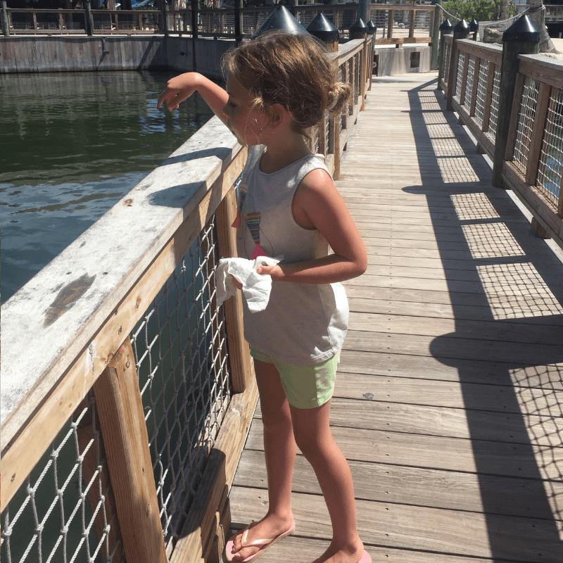 young girl feeding the fish at the islamorada fish company in the Florida keys