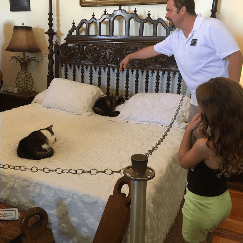 hemingways house in key west, cats on bed