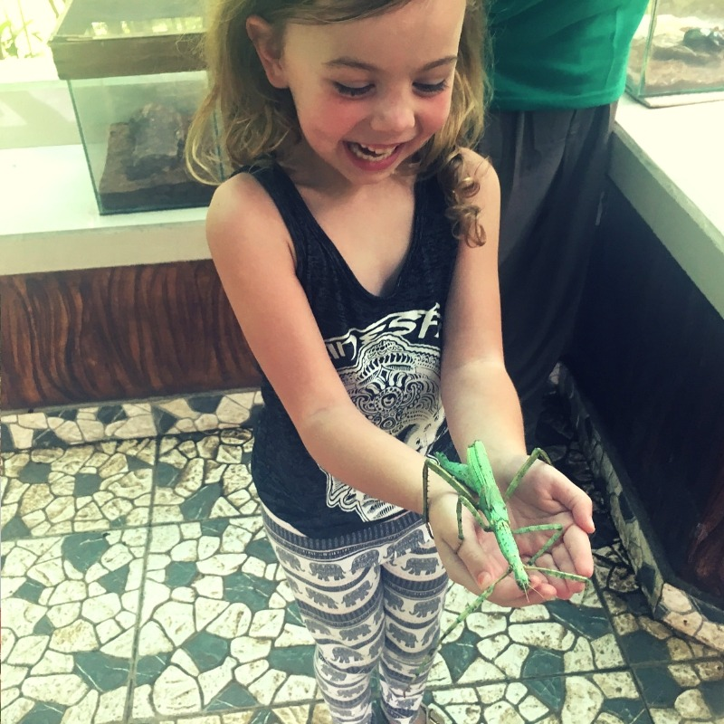 girl holding stick huge stick insect with a massive smile on her face