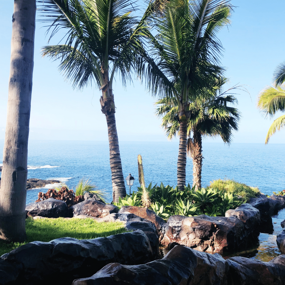 beautiful view through palm tress looking out to sea in tenerife