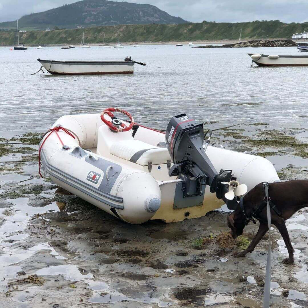 dog sniffing dinghy at a beach in wales