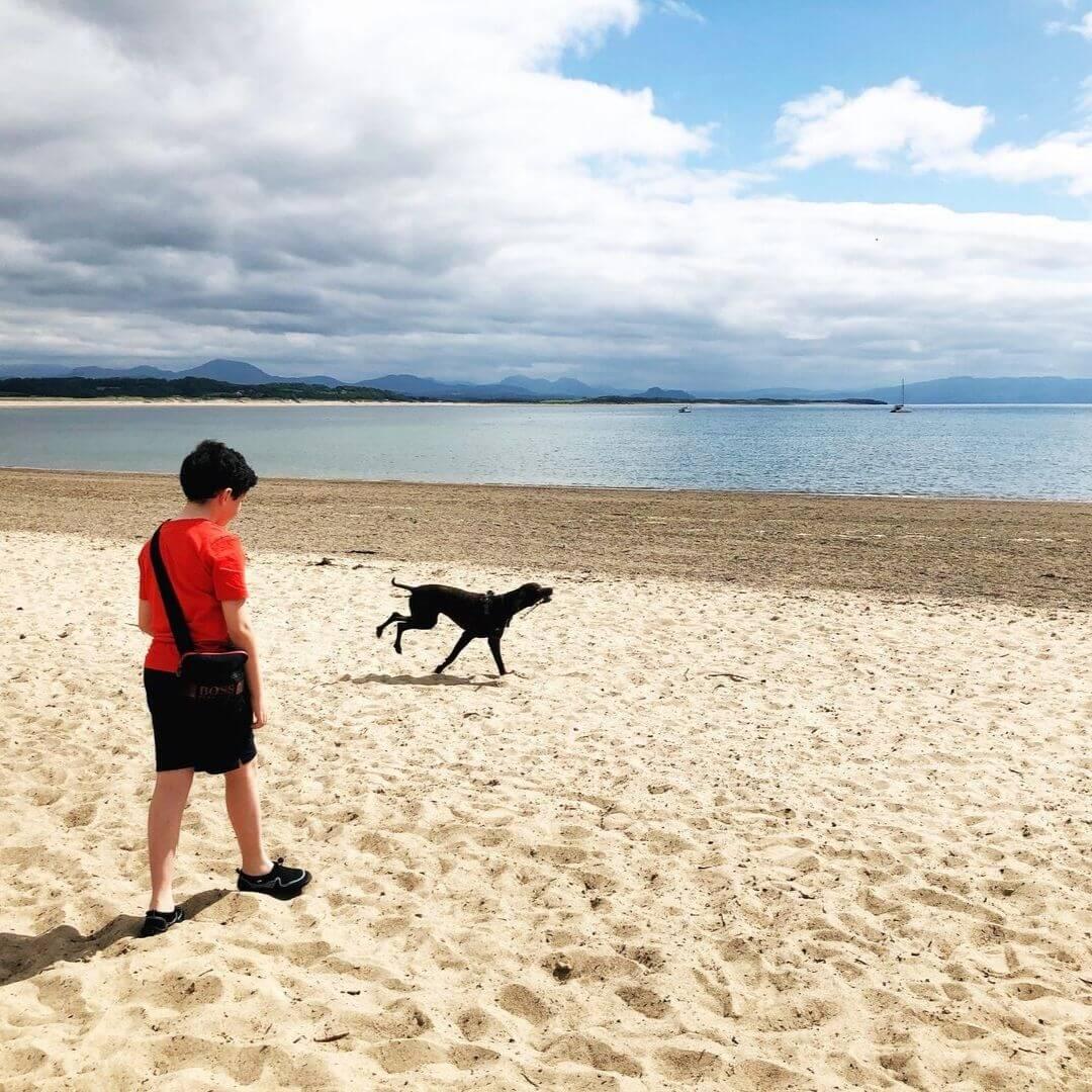 Dog Running With Stick At Pwllheli Beach