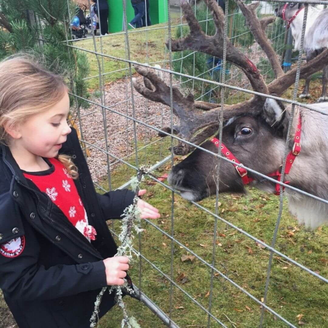 Feeding The Reindeer At The Aviemore Hotel At Christmas