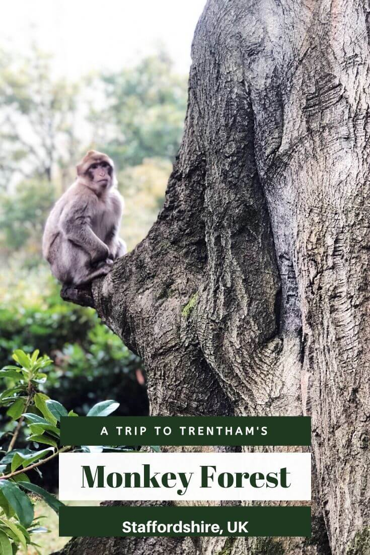 Review Of Trentham Monkey Forest In Staffordshire