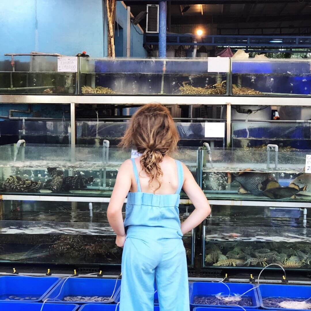 back of young girl, she is looking at a wall of fish tanks at a restaurant in vietnam