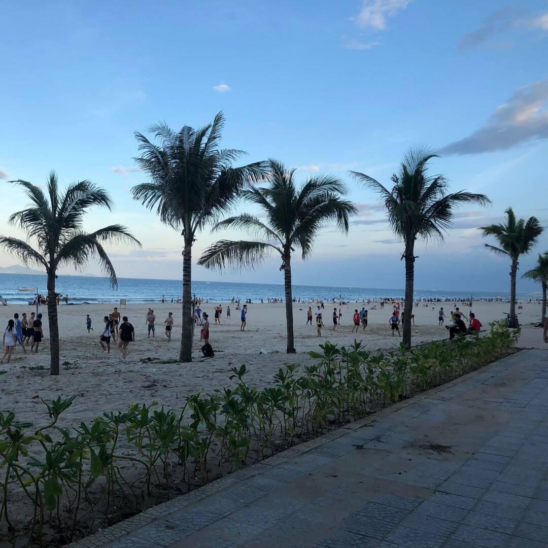 busy pal tree bordered beach