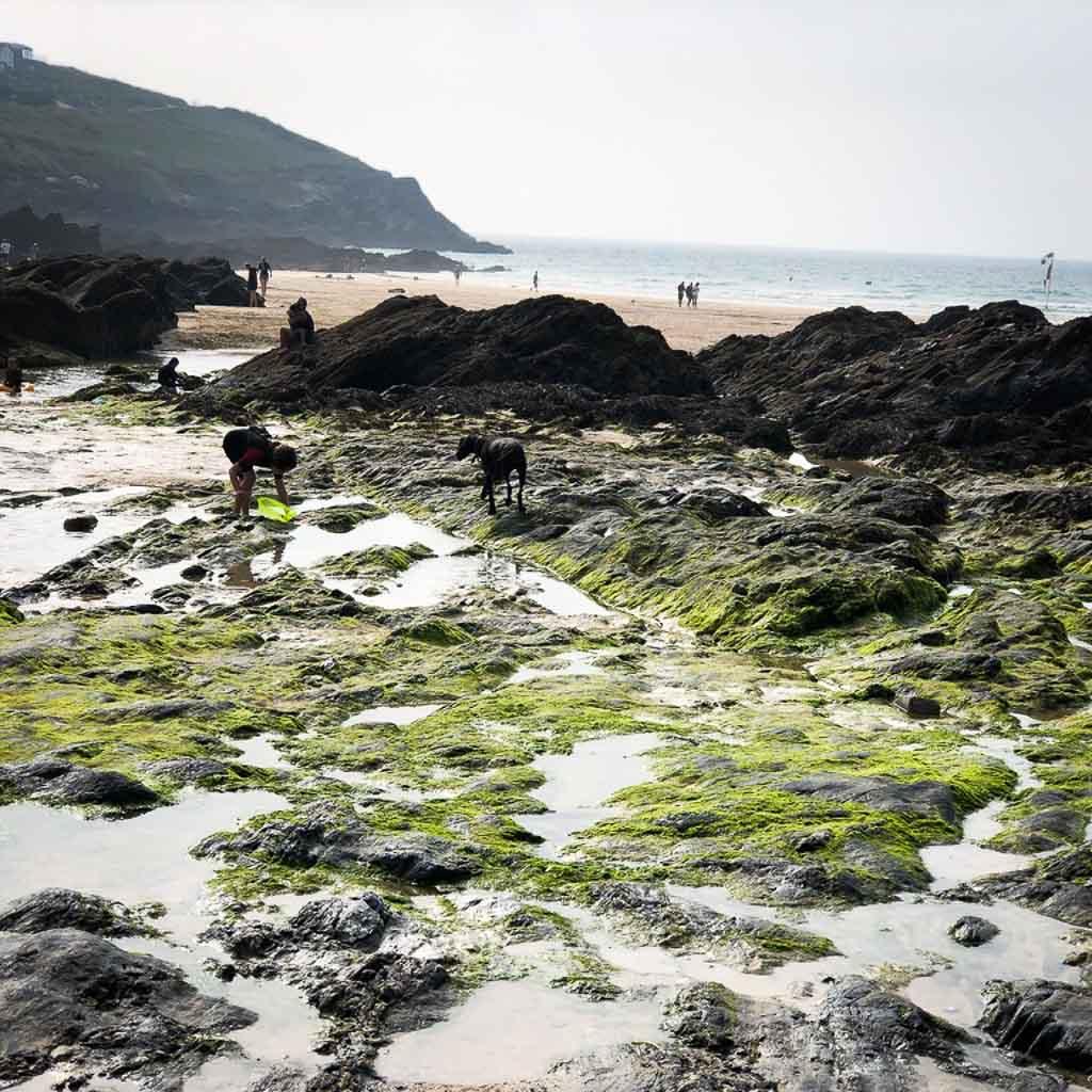Girl And Dog Rock Pooling At Fistral Beach
