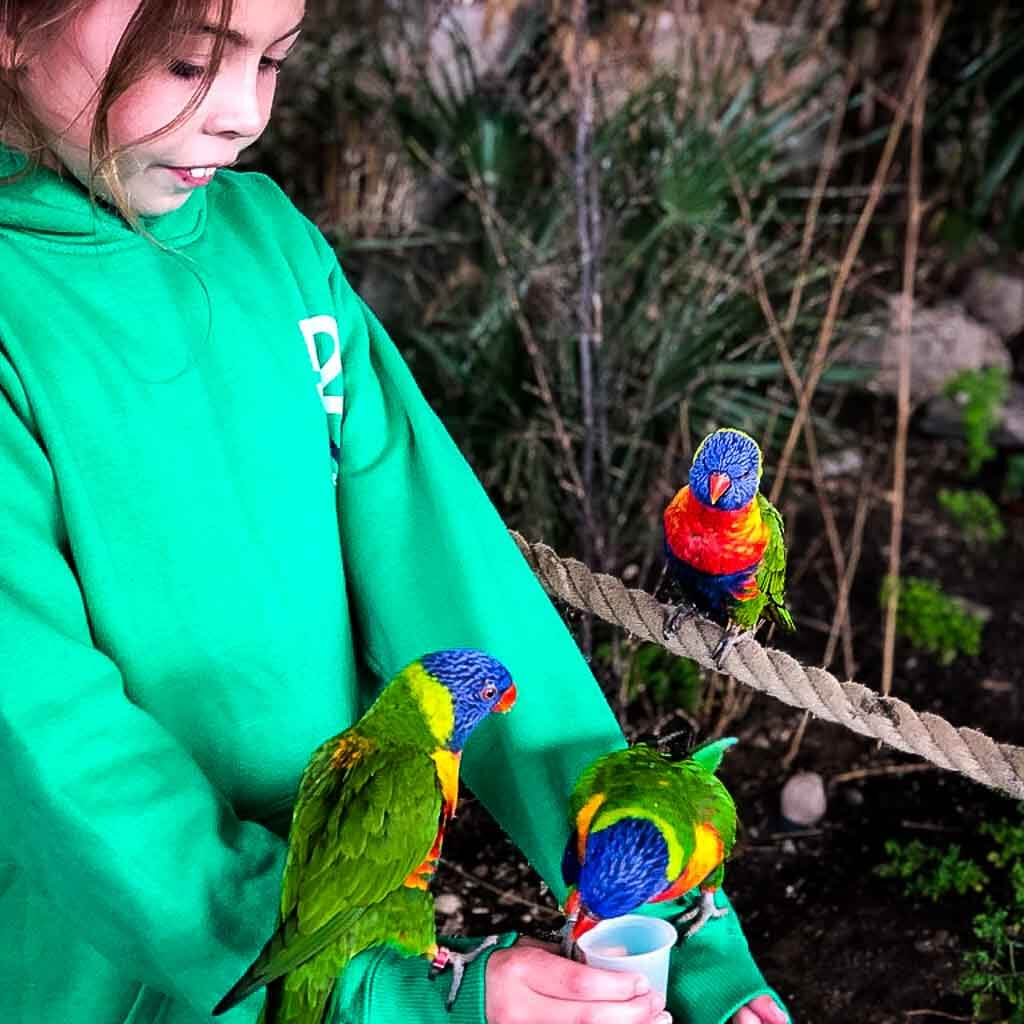 Girl In Green Jumper With Two Lorikeets On Her Arms