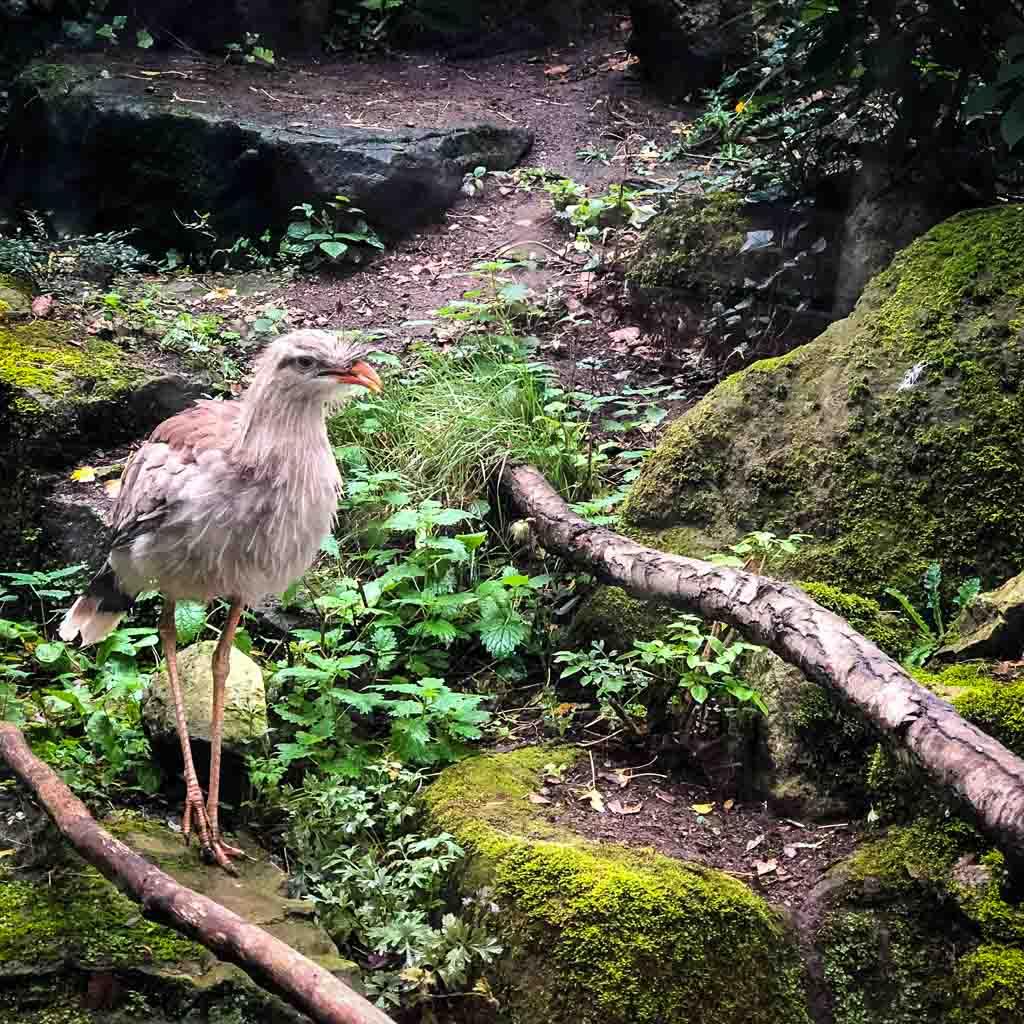 Bird At A Zoo