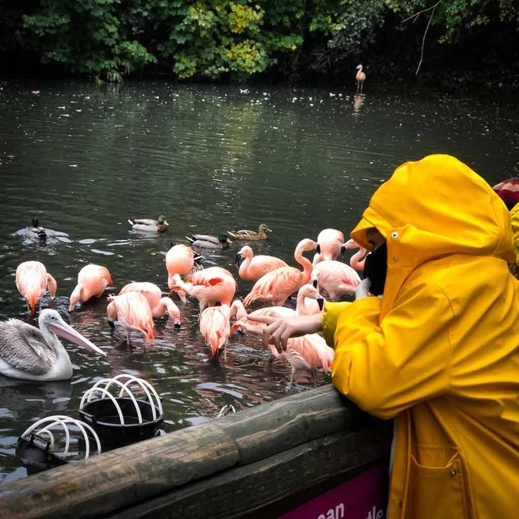 Two Girls Watching Flamingos