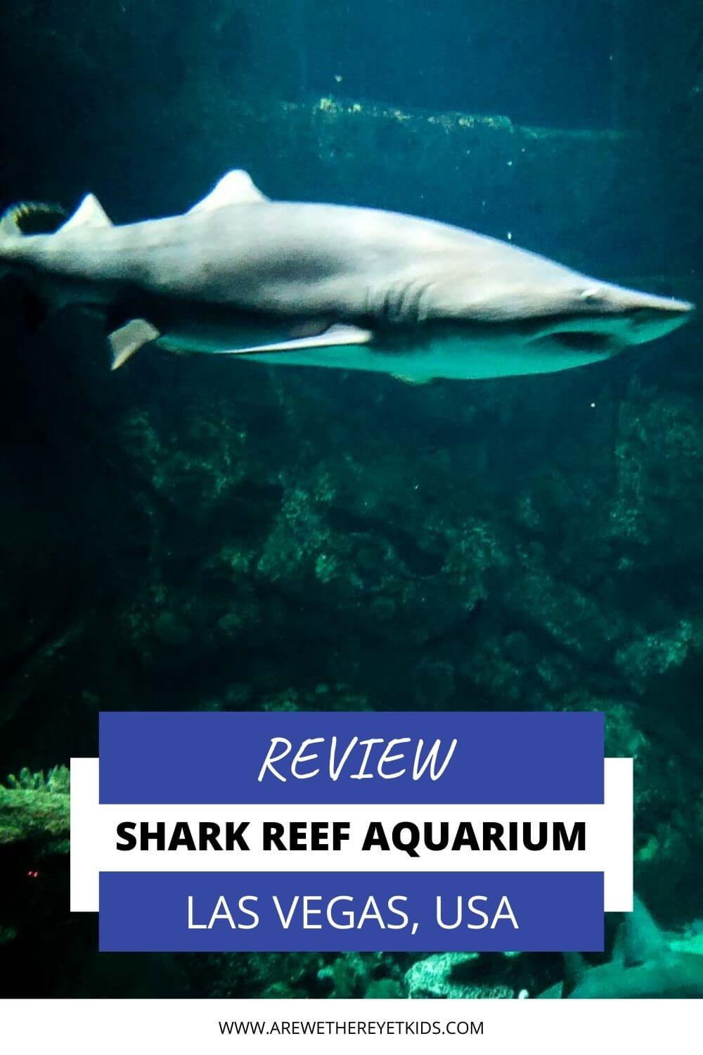shark reef aquarium with kids pin