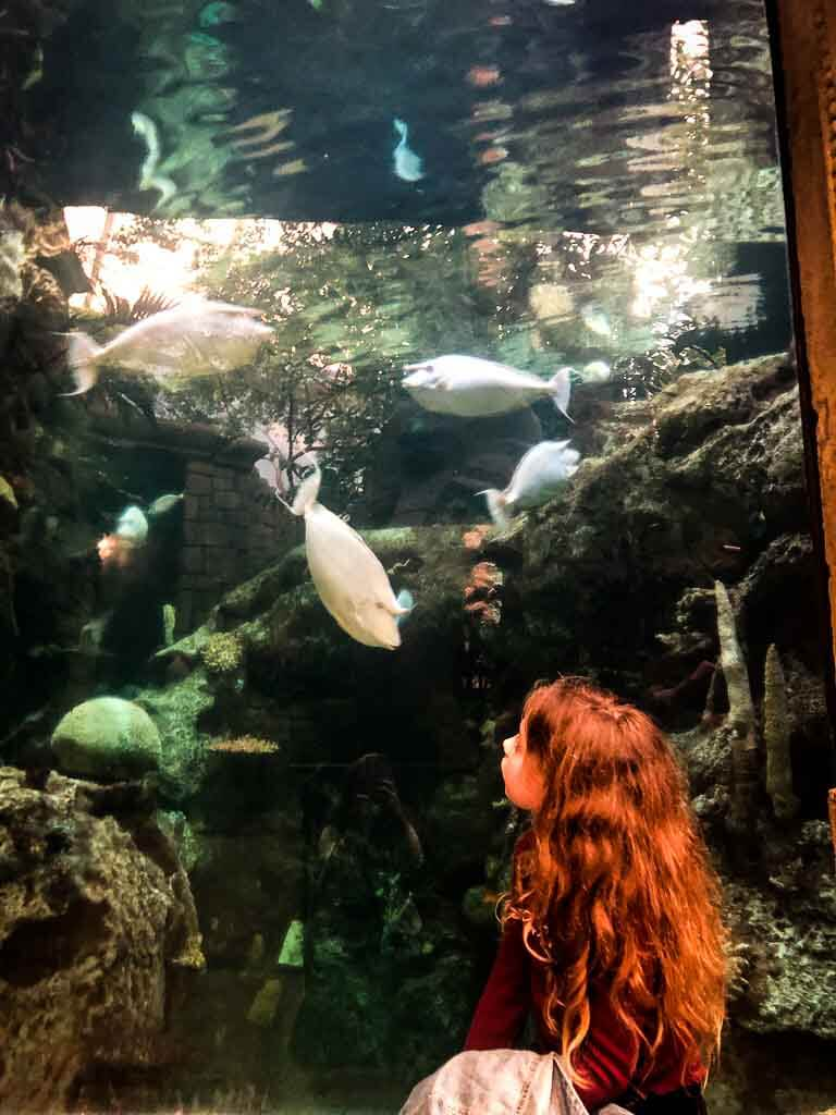 girl in purple top with long curly hair looking at fish in a huge tank