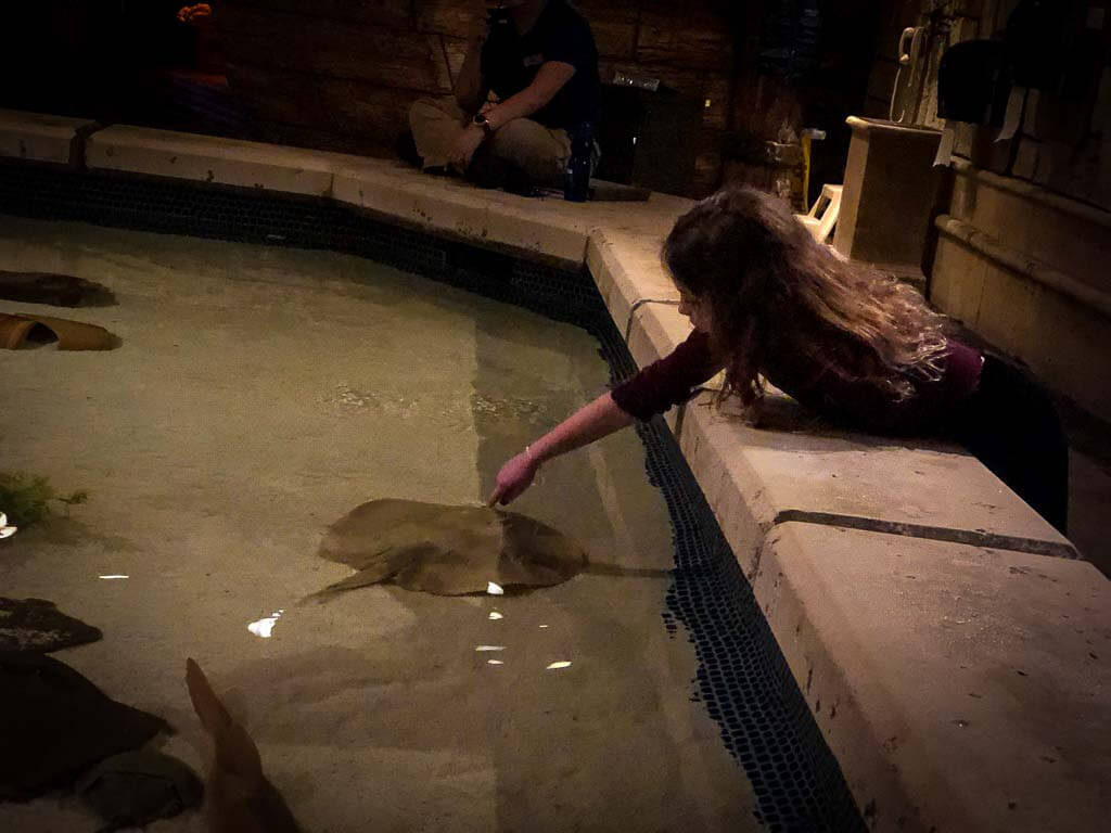 girl leaning over to touch a stringray at interactive tank at shark reef aquarium
