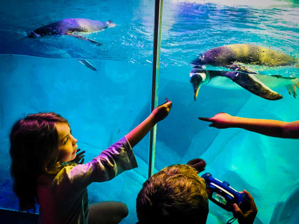 young girl holding hand out to penguin in a tank at the sea life centre