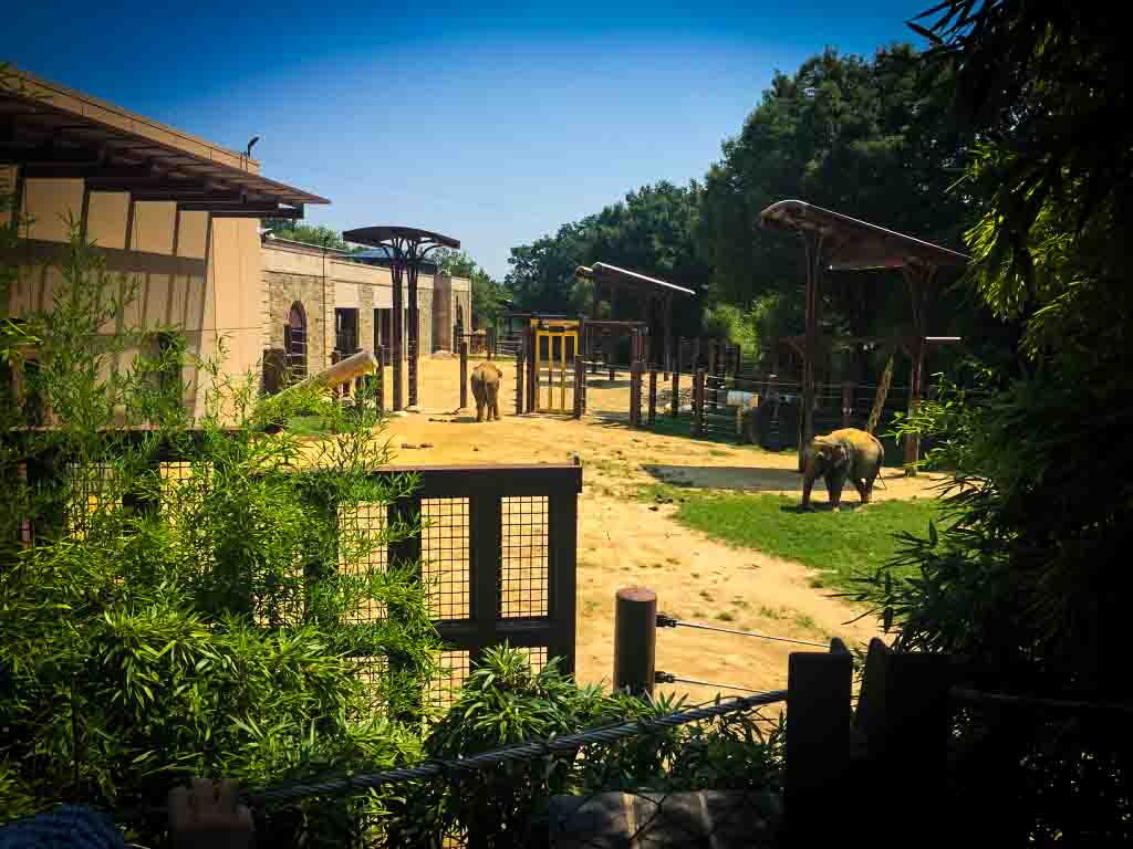 elephants at the smithsonian nation zool