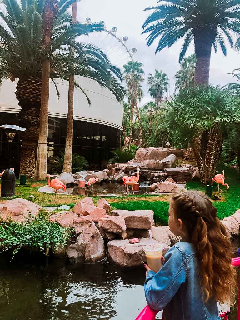 girl with curly hair watching the flamingoes at the flamingo hotel