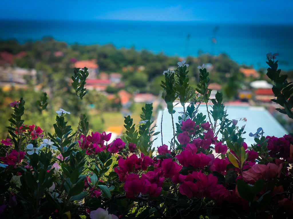 pink flowers in the foreground with a sea view behind