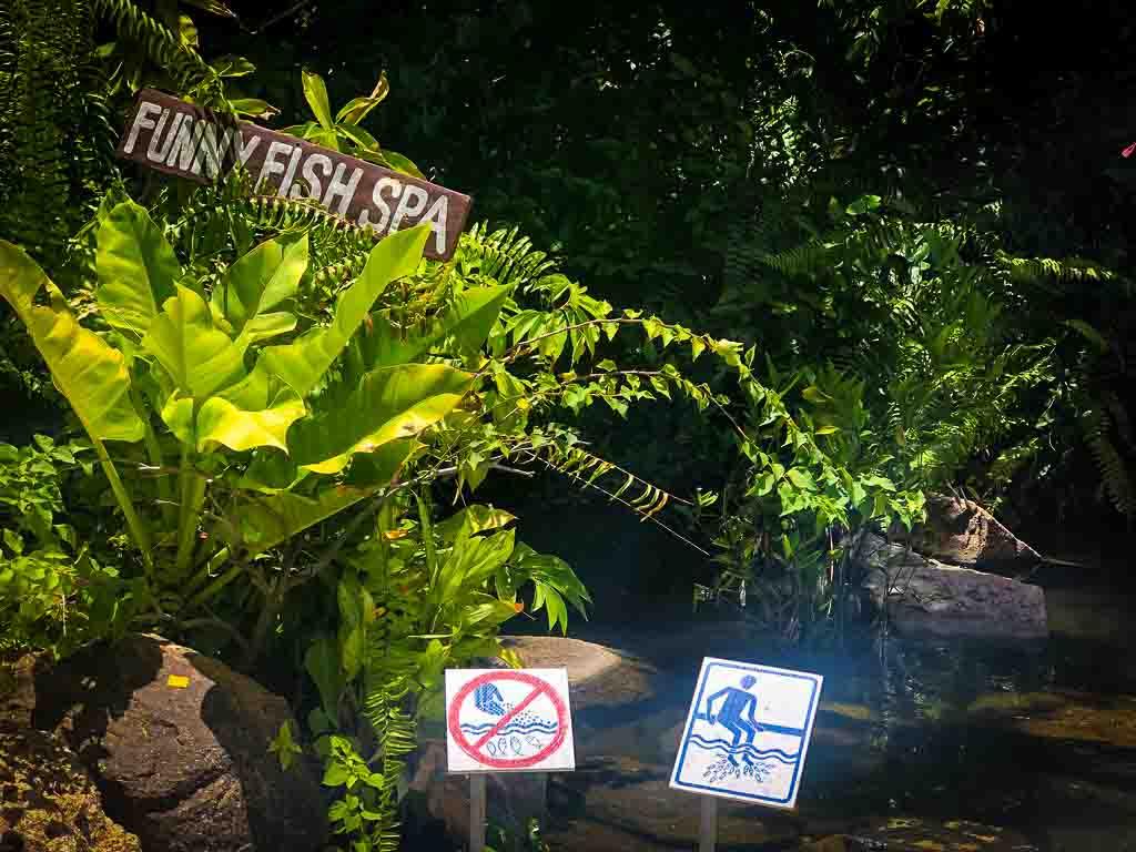fish spa area at lamai viewpoint