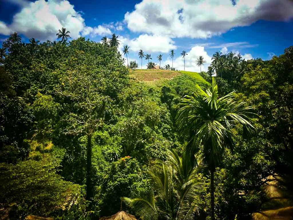 palm trees on the top of a very green hill near ubud