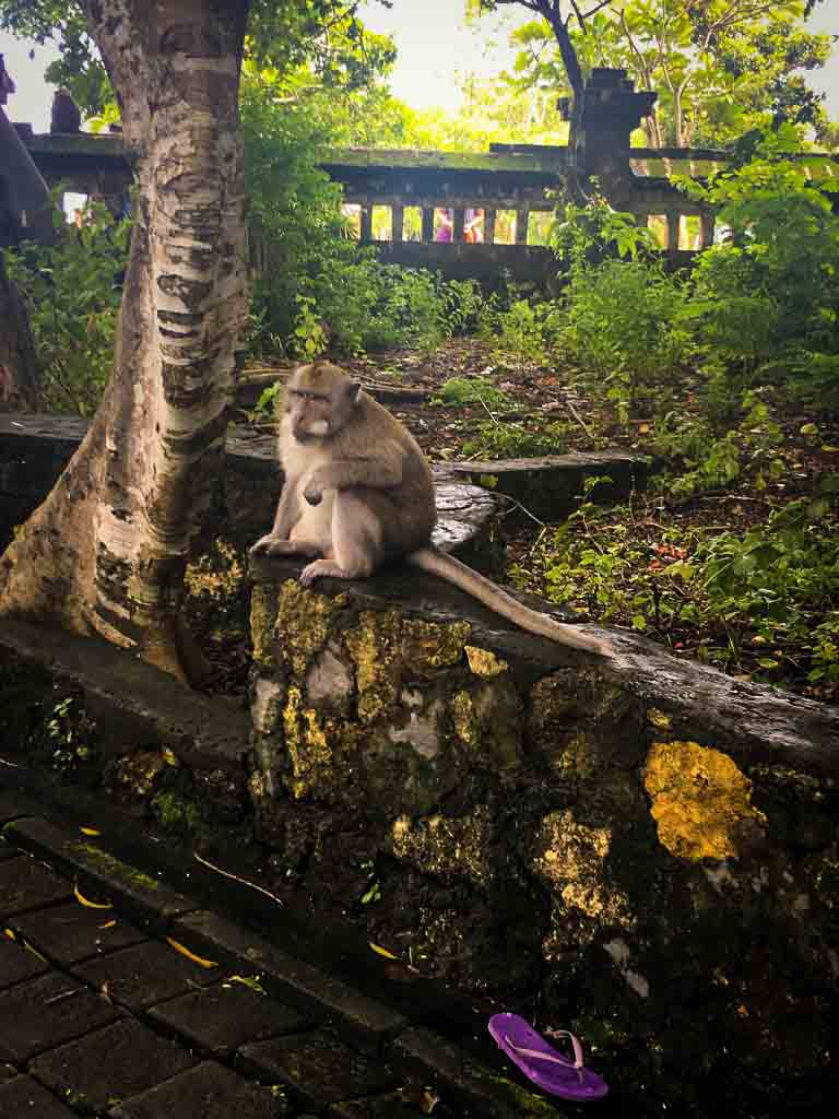 monkey in bali sat on a wall